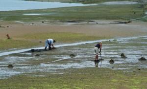 Aquicultura de bivalves na Ria Formosa (foto: Bruno Fragoso)
